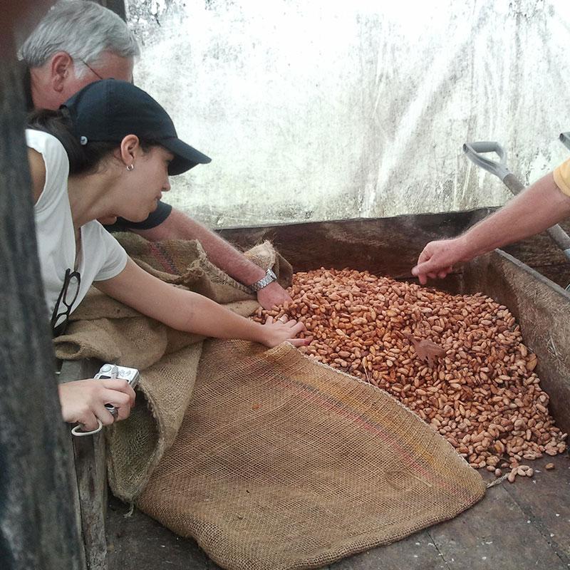Checking cacao fermentation