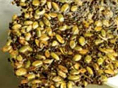 Pumpkin Seed Nib Brittle